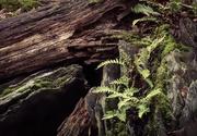 17th Mar 2020 - Forest Walk