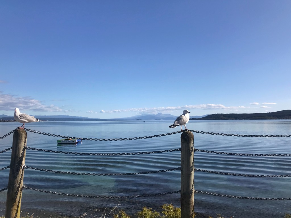 Lake Taupo in quiet mood! by happypat