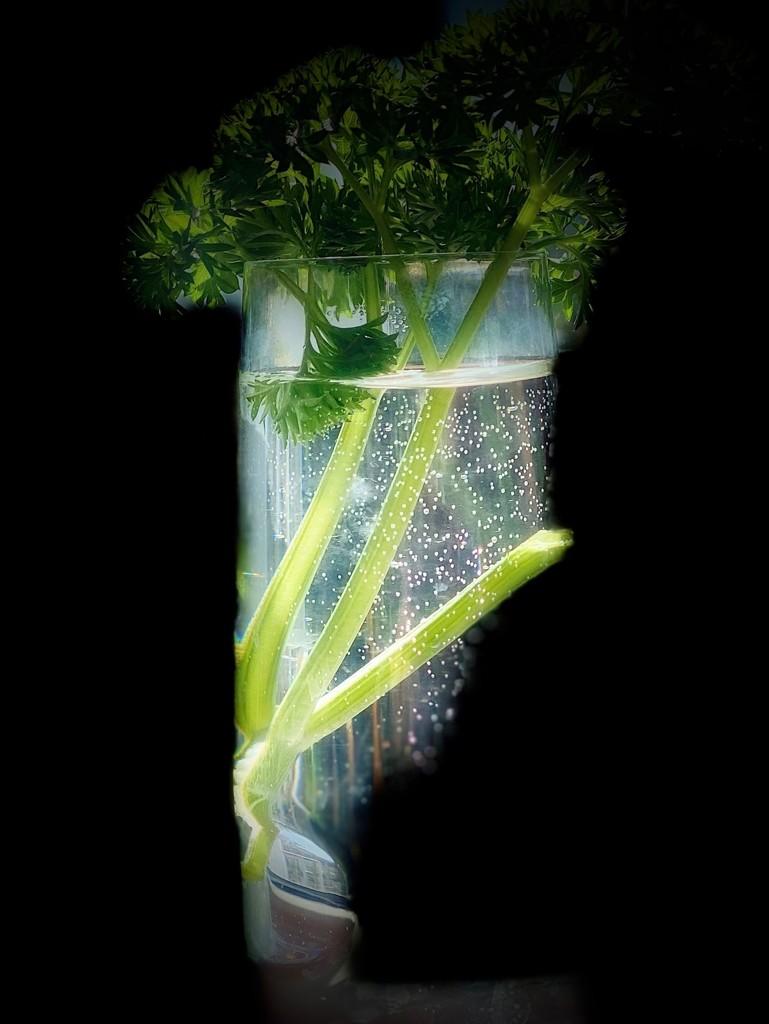 Just parsley by maggiemae
