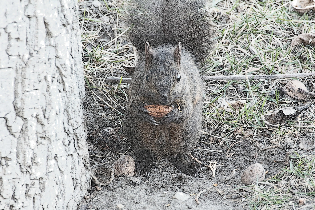 Squirrels Dinner by gq