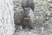 17th Mar 2020 - Squirrels Dinner