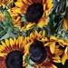 Autumn Sunflowers by ninaganci