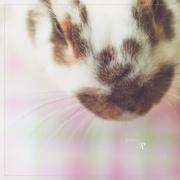 18th Mar 2020 - Rabbit for R