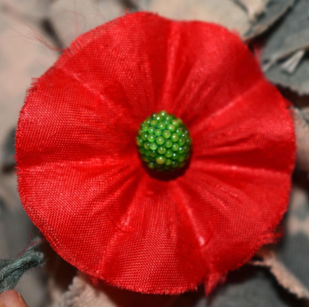 RED Poppy by homeschoolmom