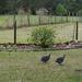 Fowl Neighbors