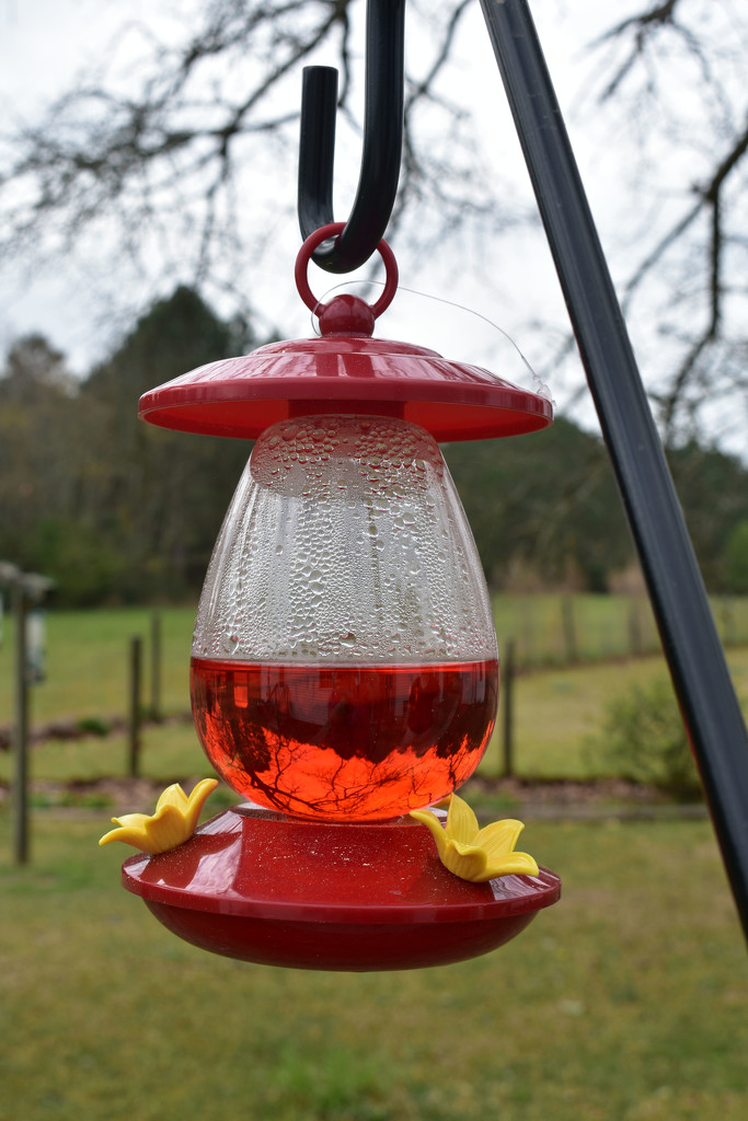 Hummingbird Feeder by homeschoolmom