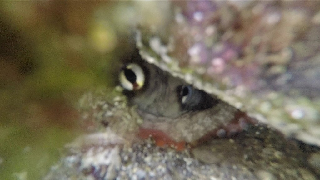 Octopus hiding by julianneovie