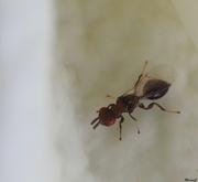 19th Mar 2020 - Tiny little bug