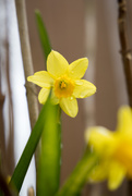 18th Mar 2020 - Hello Spring