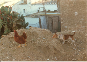 19th Mar 2020 - Poultry Day