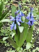 19th Mar 2020 - A splash of blue