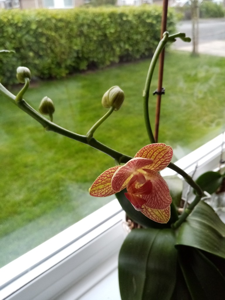 Orchid by g3xbm