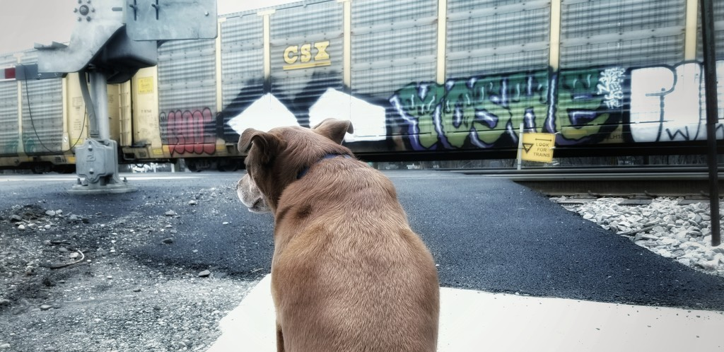 Stuck on the wrong side of the tracks! by ukandie1