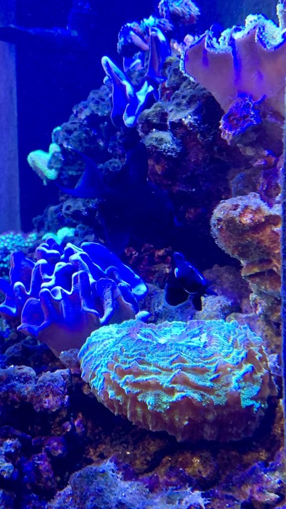 The doctor's office aquarium by louannwarren