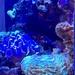 The doctor's office aquarium