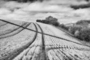 20th Mar 2020 - Tracks