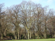 12th Mar 2020 - Trees in the Park