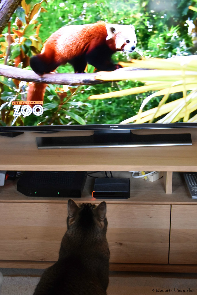 watching tv by parisouailleurs