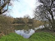 13th Mar 2020 - Iremongers Pond