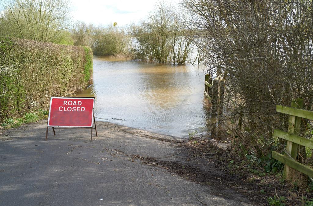 Somerset Levels - March 2020 by bashibazouk