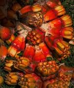 13th Mar 2020 - Pandanus fruit