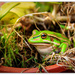 Frogs nest... by julzmaioro