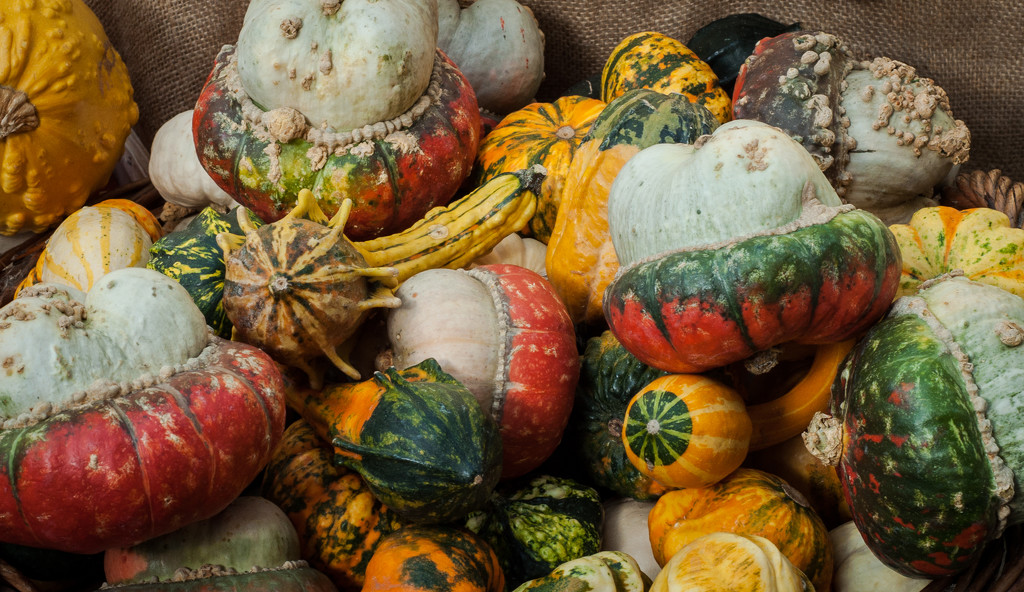 Gourd by brigette