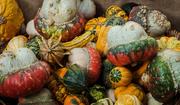 21st Mar 2020 - Gourd