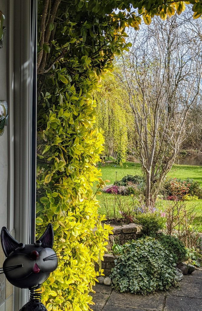 Through the window by stevehurst