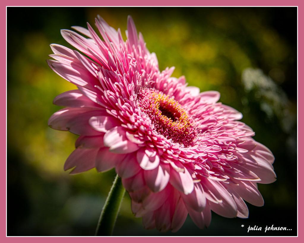 Rainbow Month ... Pink #4 by julzmaioro