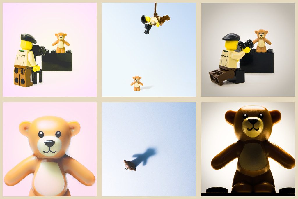 (Day 37) - Beary Your Angle by cjphoto