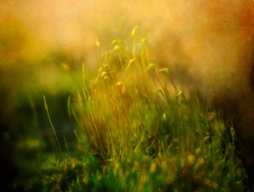 Tiny Landscape by samae