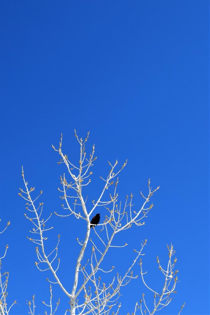 Blue Sky by sandlily