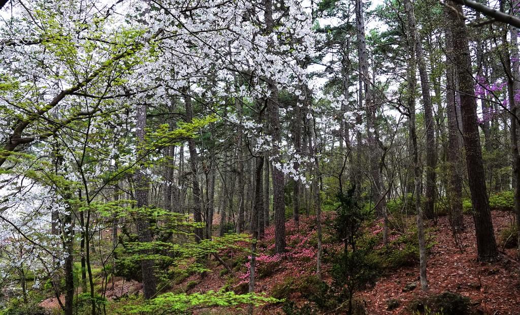 Garvan Woodland Gardens by milaniet
