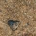 Heart rock on the beach.