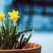 A Pop of Spring
