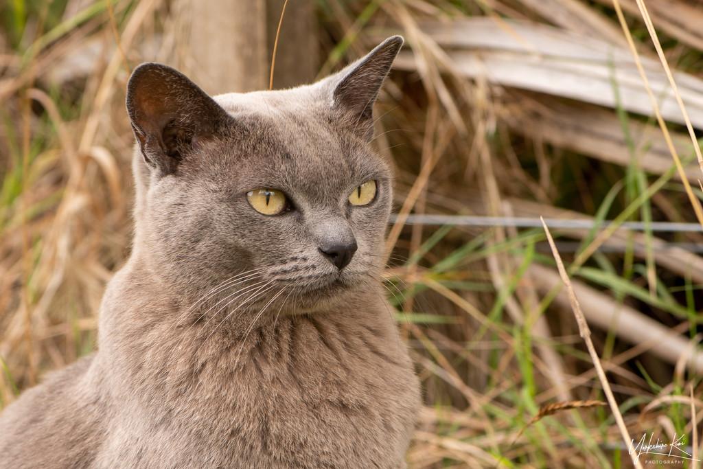 Grumpy Cat by yorkshirekiwi