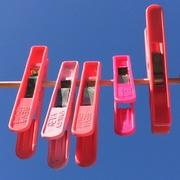 22nd Mar 2020 - Pink