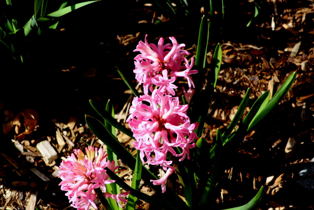 Spring flower by bruni