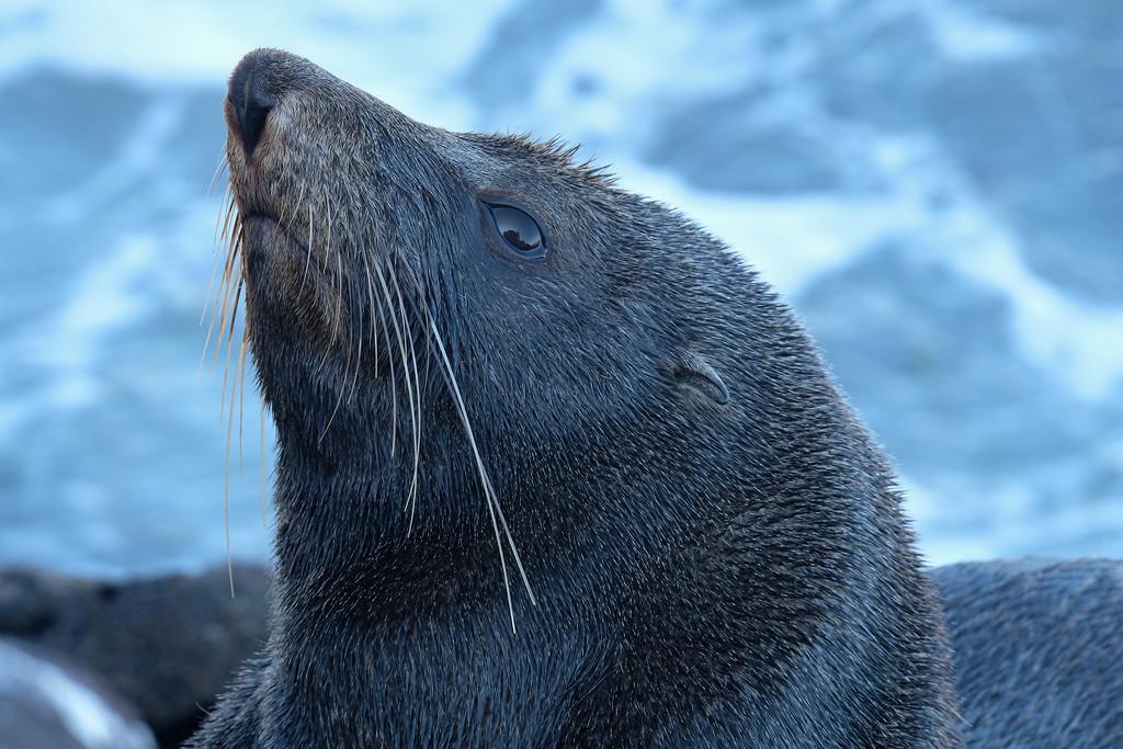 Seal at Sumner by maureenpp