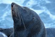 22nd Mar 2020 - Seal at Sumner