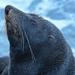 Seal at Sumner