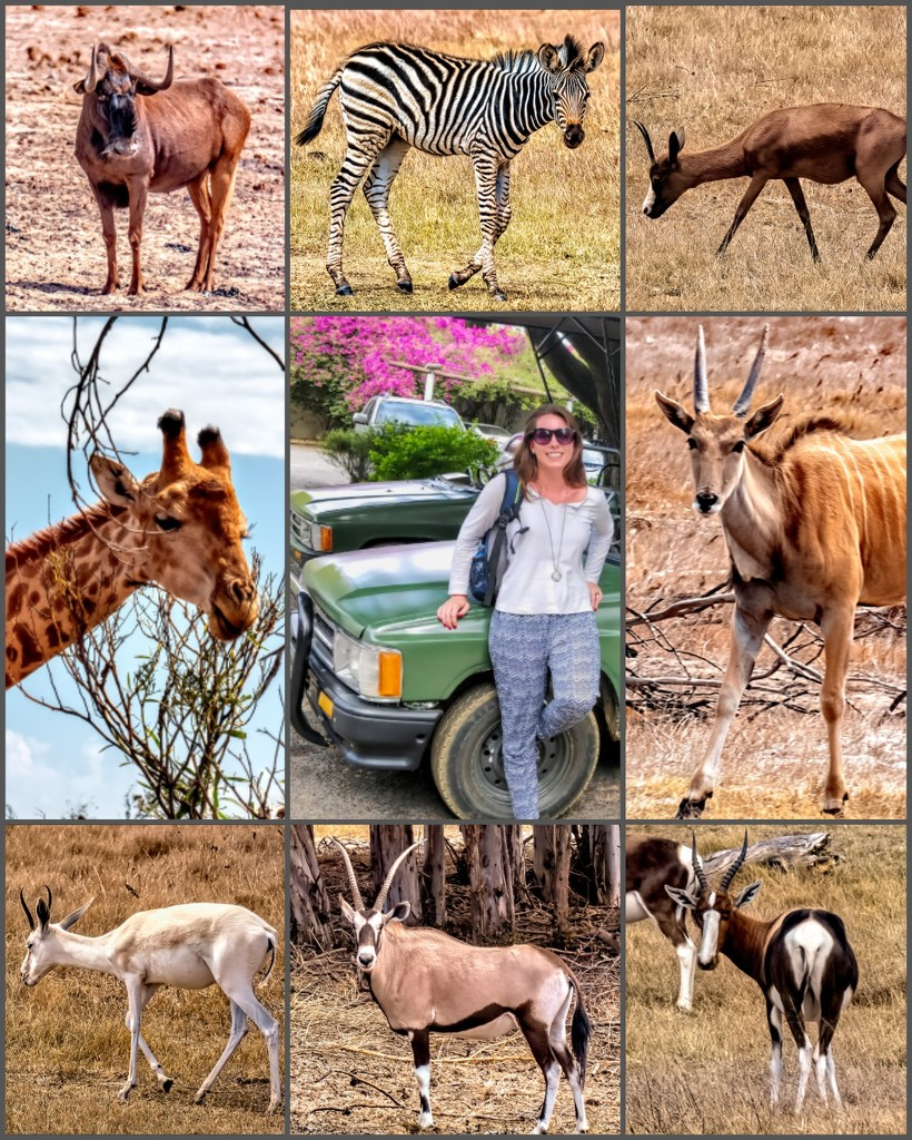 A Game drive with Katja by ludwigsdiana