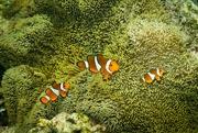 15th Mar 2020 - Finding Nemo