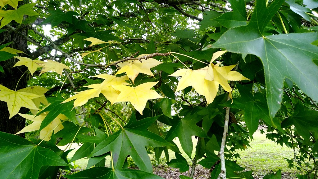 Beautiful leaves by 777margo