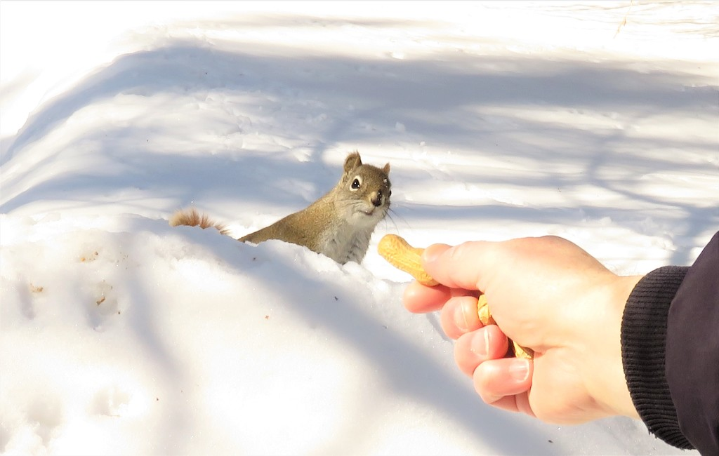 My hubby likes to feed the Squirrels by radiogirl