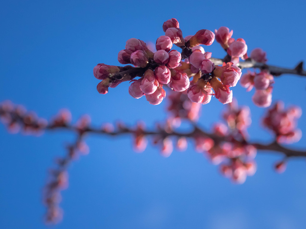 pink - 4 by haskar