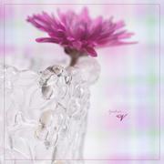 22nd Mar 2020 - Vase for V