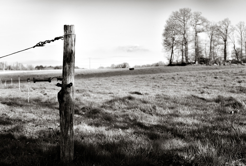 Occasional Fence Post 36... by vignouse
