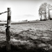 Occasional Fence Post 36...